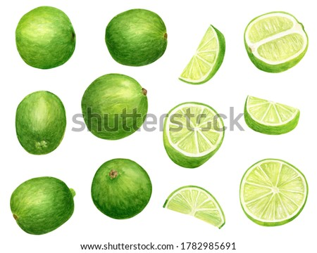 Watercolor lime set. Hand painted botanical illustration of slices, green citrus fruits isolated on white background. Juicy fresh limes clip art for food package, decoration