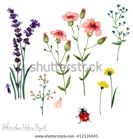 Stock Photo Watercolor Nature Clipart - Flowers