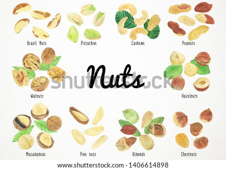 Watercolor Nuts Illustration, Nuts Clipart