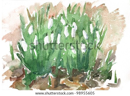 Watercolor of a blooming flowers of a delicate white snowdrop