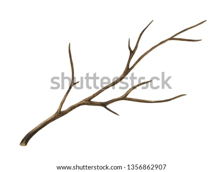 Watercolor old dry, bare tree, branch. Isolated on white background. Hand painting on paper Foto stock ©