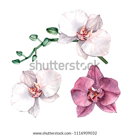 Watercolor orchid branch, hand drawn floral illustration isolated on a white background. Tripical flower illustration
