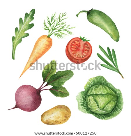 Watercolor organic set vegetables and herbs isolated on white background. Fresh farm products for design of healthy food, kitchen, market, menu.