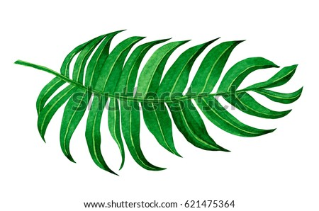 watercolor painting green leave ...