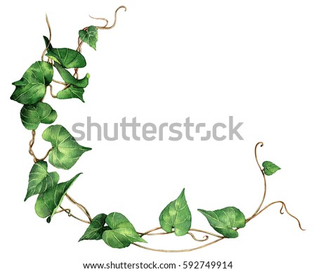 Watercolor painting green leaves ivy isolated on white background. Watercolor hand painted illustration. Green leaf pattern ,wallpaper or textile illustration tropical exotic leaf for wallpaper.