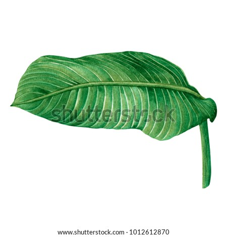 Watercolor painting green leaves,palm leaf isolated on white background.Watercolor hand painted illustration tropical,aloha exotic leaf for wallpaper vintage Hawaii style pattern.With clipping path. - Shutterstock ID 1012612870