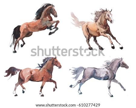 Watercolor painting of galloping horse, free running mustang aquarelle.