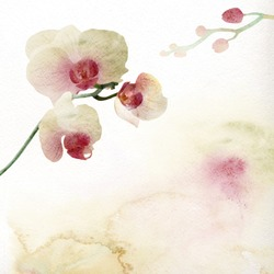 Watercolor painting, orchid
