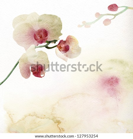 Watercolor painting orchid