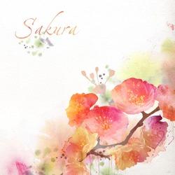 Watercolor painting, sakura