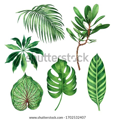 Watercolor painting set monstera coconut,palm leaf,green leaves isolated on white background.Watercolor hand painted illustration tropical exotic leaf for wallpaper vintage Hawaii style pattern.