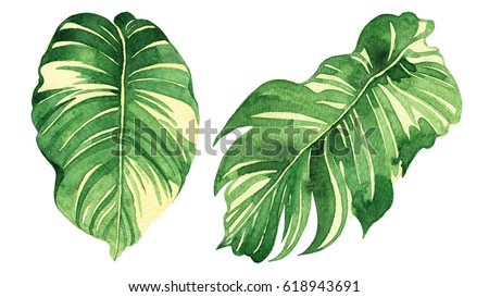 Watercolor painting set two green leave isolated on white background. Watercolor hand painted illustration green leaf for wallpaper,pattern detail or closeup brush stroke texture. With clipping path.