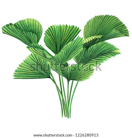 Watercolor painting tree coconut,palm leaf,green leaves isolated on white background.Watercolor hand drawn illustration tropical exotic leaf for wallpaper vintage Hawaii aloha summer style pattern.