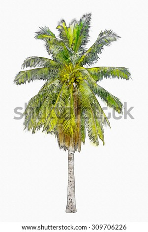 Watercolor palm tree drawing illustration in white isolated background with rich detail