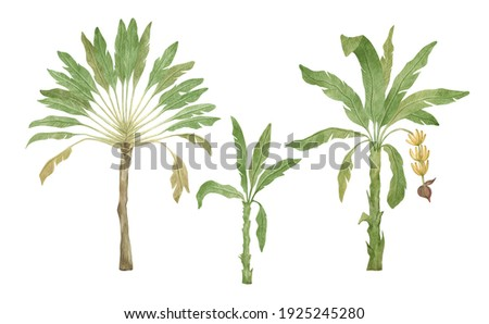 Watercolor palm tree in green color isolated on white background. Vintage banana trees. Floral tropical jungle.