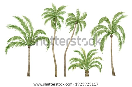 Watercolor palm tree in green color isolated on white background. Vintage coconut trees. Floral tropical jungle.