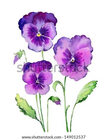 Stock Photo Watercolor Pansies