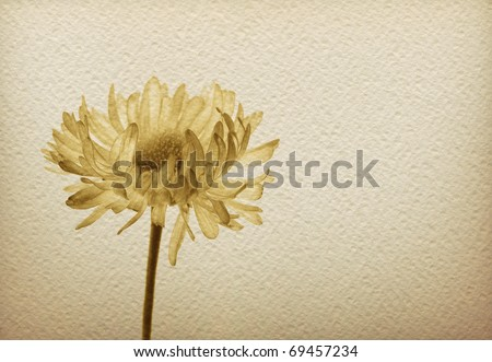 Watercolor paper background with monochrome sepia image of a flower. Romantic and sadness concept