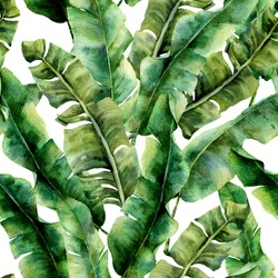 Watercolor pattern with magnificent banana palm leaves. Hand painted exotic greenery branch. Tropic plant isolated on white background. Botanical illustration. For design, print or background