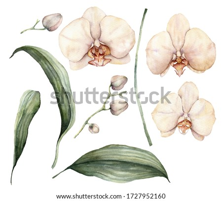 Watercolor peach and creamy orchids. Hand painted tropical flowers, branches, leaves and buds isolated on white background. Floral illustration for design, print, fabric or background.