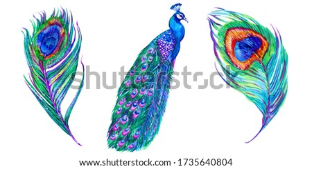 Watercolor peacock, feathers set. Hand drawn tropical bird, feather illustration. Beautiful floral elements isolated on white background. Design for fashion, prints, textile Foto stock ©