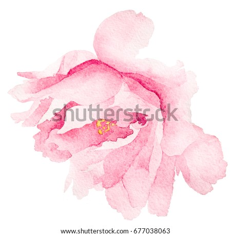 Stock Photo watercolor  pink flower peony rose . for postcard, invitation, tag, flyer, logo,textile, illustration isolated on white background