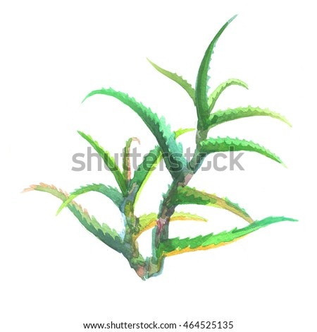 Watercolor plants aloe vera