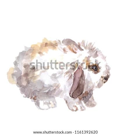 Watercolor portrait of a pet: rabbit. #1161392620