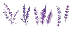 Watercolor provance lavender set. Flowers isolated on white background