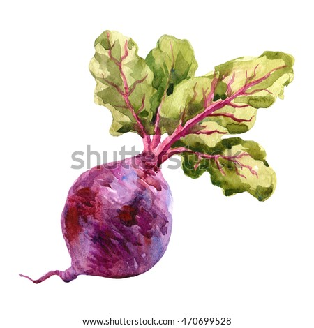 Watercolor raster illustration of beet. Raster design element.