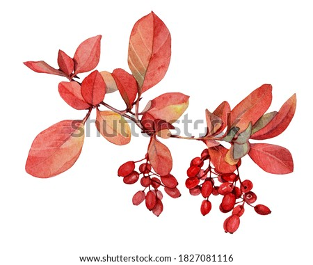 Watercolor red autumn branch with leaves and berries barberry isolated on white background. Art creative realistic hand-drawn object for sticker, wallpaper, florist, notebook, celebration, wrapping Stock photo ©