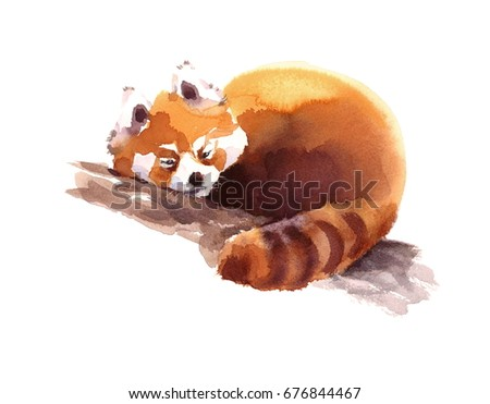 Stock Photo Watercolor Red Panda Sleeping on the Branch Hand Drawn Animal Illustration isolated on white background