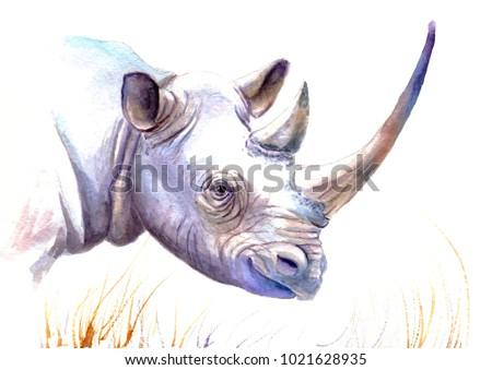 watercolor rhinoceros, sketch