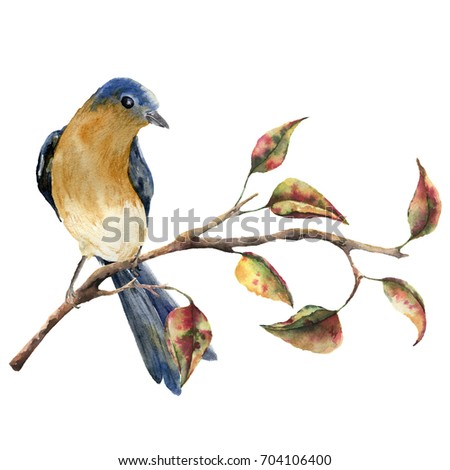 Stock Photo Watercolor robin redbreast sitting on tree branch with red and yellow leaves. Autumn illustration with bird and fall leaves isolated on white background. Nature print for design