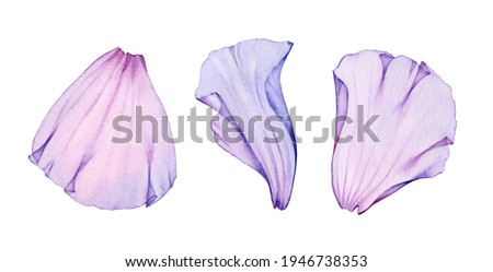 Watercolor rose petals set. Three purple transparent petals. Realistic hand drawn illustration isolated on white for wedding stationery design, valentines day greeting cards. High quality illustration