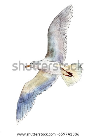 watercolor seagull isolated on...