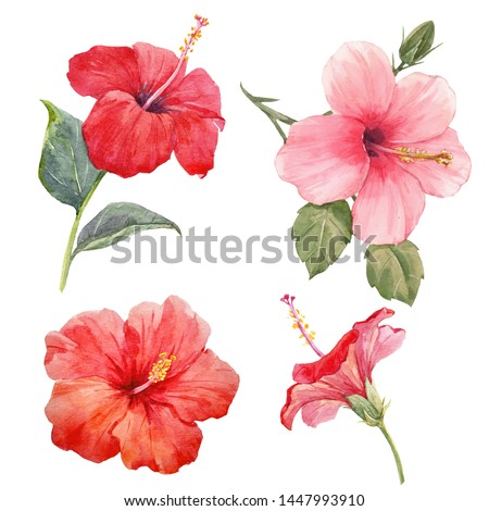 Watercolor set illustration pink and red hibiscus, isolated flowers