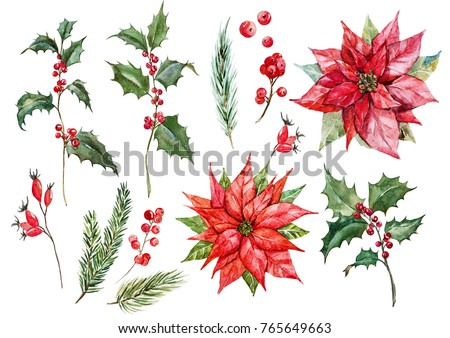 Watercolor set isolated Christmas illustrations, flower poinsettias, Holly, red berries, rose hips, spruce branches