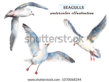 Stock Photo Watercolor set of beautiful seagulls in different positions. Hand drawn  illustration, isolated on a white background.