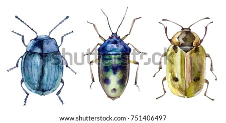 Watercolor set of beetles insect isolated on white background animal bugs