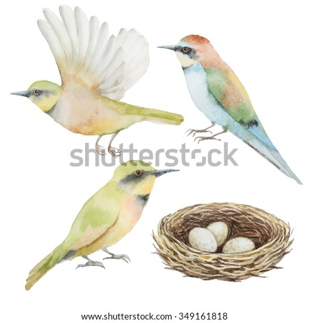 Watercolor set of bird and nest with eggs. Elements for your design.