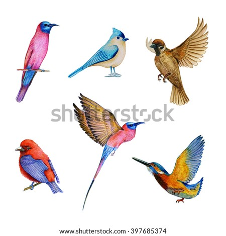 watercolor set of bird, flying birds