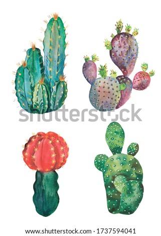 Watercolor set of cacti. Homemade cacti.