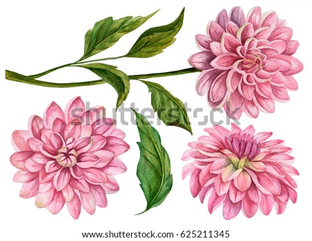 Watercolor set of dahlia flowers, hand drawn floral illustration, botanical elements isolated on white background.