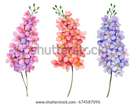 Watercolor set of delphiniums, hand drawn floral illustration, bright small flowers isolated on white background.