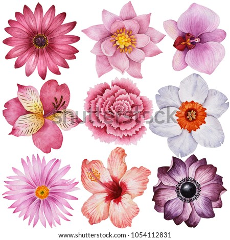 Watercolor set of different flowers, hand drawn illustration of daisy, lily, orchid, alstoemeria, carnation, daffodil, aster, hibiscus, anemone. Painted floral elements isolated on a white background.