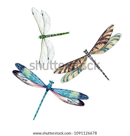 Watercolor set of dragonfly, isolated illustration, flying dragonfly