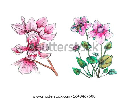 watercolor set of floral elements, crocuses, magnolia, wildflowers. Branch of pink romantic flower. Tropical exotic blossom. Hand-drawn sketch for wedding, printing, card, invitation, design.