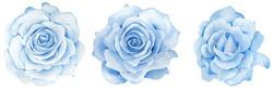 Watercolor set of hand-drawn blue roses. Blue flowers clipart. Romantic set.