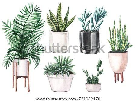 Watercolor set of home plants in pots.